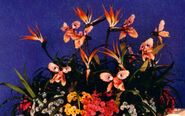 19-Singing-flowers2