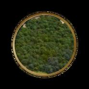 Forêt Civilization V