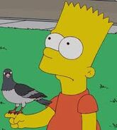 Bart and the pigeom