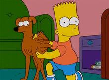 Bart vovo bunda ajudante