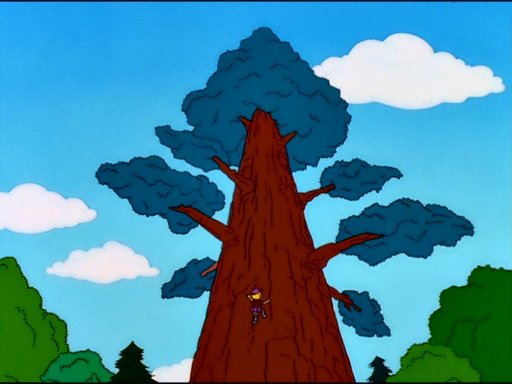Springfield's oldest redwood tree