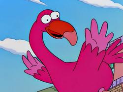 Flamenco Flamingo