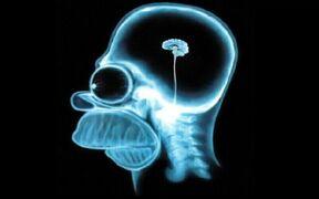 Mózg Homera