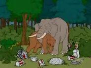 Elaphant eating bear
