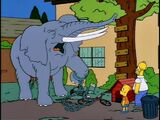 Bart Gets an Elephant