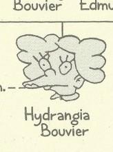 Hydrangia Bouvier