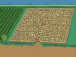The A-Maize-Ing Maize Maze