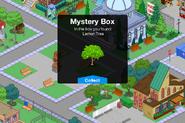 Lemon tree from Mystery Box