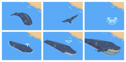 Whale animation