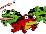 Invasive Toads
