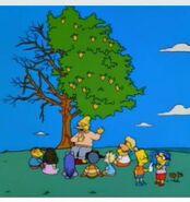 Springfield Lemon Tree-Broken Branches