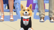 The Sims 4 Cats & Dogs Screenshot 08