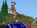 The Sims Pet Stories4