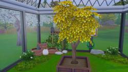 TS4 Денежное дерево в саду.png