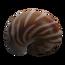 Concha de nautilo