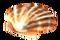 Морской гребешок (оранжевый).png