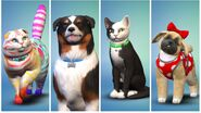 New pets sims