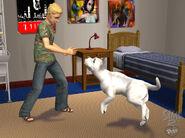 LS2 Mascotas 18