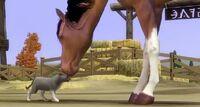 The sims 3 Cat & Horse.JPG