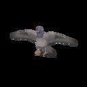 Pidgeon Transparent