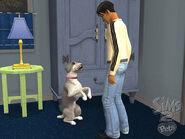 LS2 Mascotas 03