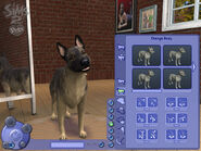 Wallpaper Pets 5