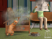 LSH Mascotas 05