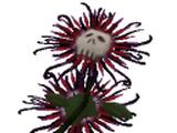Flor de la muerte