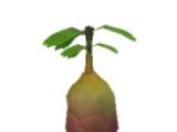 Plantas (Los Sims 3)