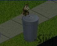 Енот The Sims