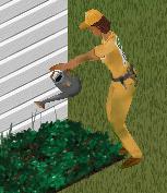 Sims gardener