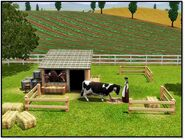 Cow store content 2