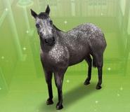 Tordo Sims Freeplay