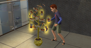 Child Sim harvesting from the money tree in The Sims 2