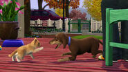 The Sims 3 Pets Screenshot 01