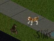 Эль Бандито и пёс