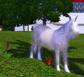 Unicorn gazing