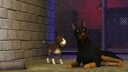 The Sims 3 Pets Screenshot 05
