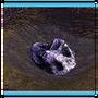 Обладатель редчайшего метеорита