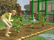 The Sims 2 Seasons Screenshot 06
