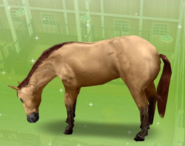 Bayo claro Sims Freeplay