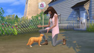 TS4 Cats and Dogs 14