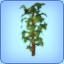 Grow Plant Wish