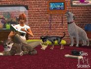 LSH Mascotas 01