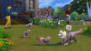 The Sims 4 Cats & Dogs Screenshot 21