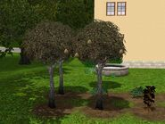 Money-tree-2-ts3