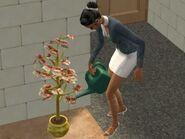 Денежное дерево из The Sims 2