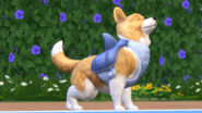 TS4 Cats and Dogs 9