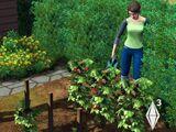 Gardening (The Sims 3)
