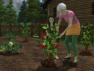 Hidden Springs granny